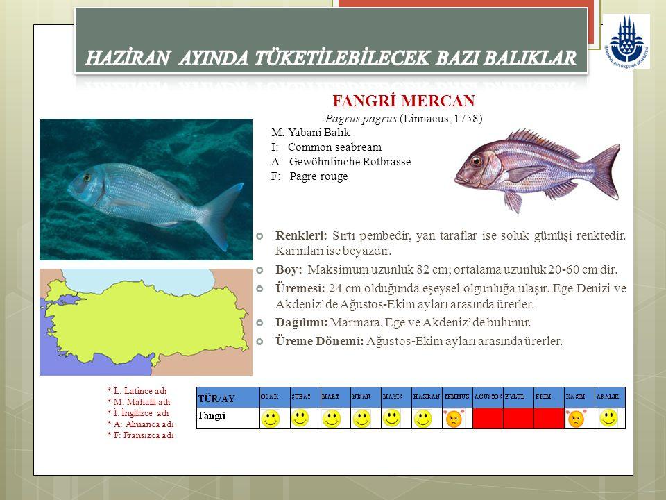 FANGRİ MERCAN Pagrus pagrus (Linnaeus, 1758) M: Yabani Balık İ: Common seabream A: Gewöhnlinche Rotbrasse F: Pagre rouge  Renkleri: Sırtı pembedir, y