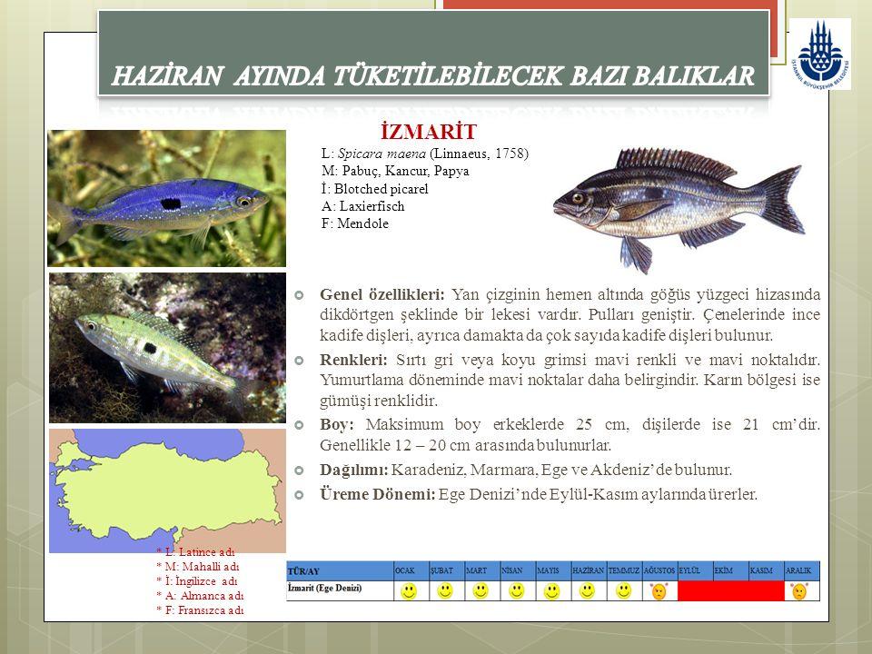 İZMARİT L: Spicara maena (Linnaeus, 1758) M: Pabuç, Kancur, Papya İ: Blotched picarel A: Laxierfisch F: Mendole  Genel özellikleri: Yan çizginin heme