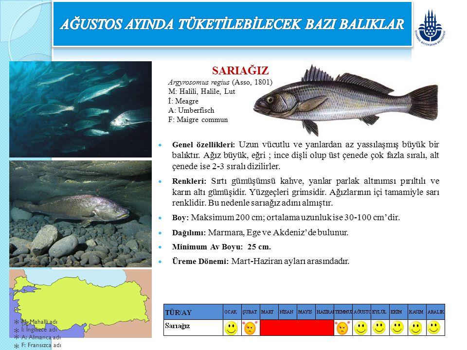 SARIAĞIZ Argyrosomus regius (Asso, 1801) M: Halili, Halile, Lut İ: Meagre A: Umberfisch F: Maigre commun Genel özellikleri: Uzun vücutlu ve yanlardan
