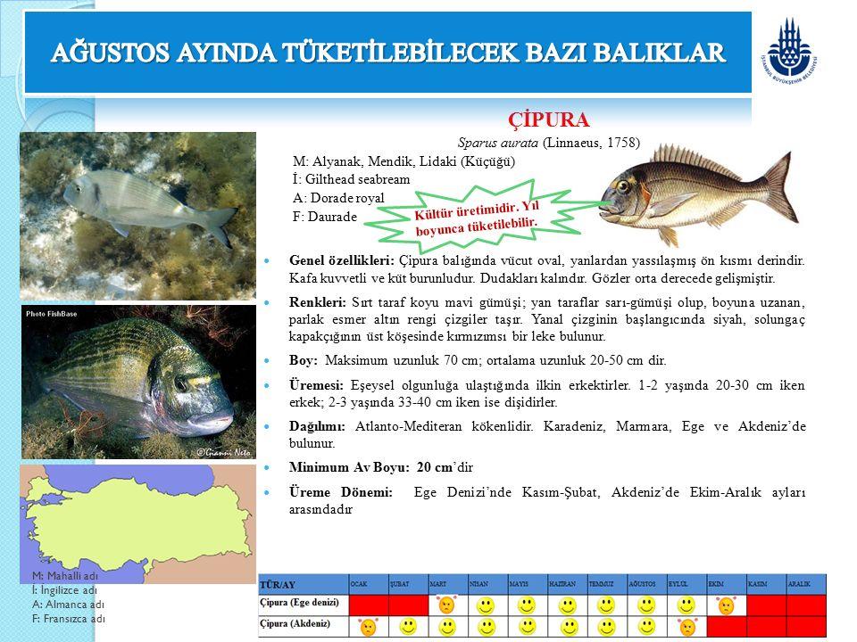 KALKAN Psetta maxima maeotica (Pallas, 1811) M: Sofra Balığı İ: Turbot A: Haandreiß F: Turbot Genel özellikleri: Derisi pulsuz fakat küçük kemiksi yumrularla kaplıdır.