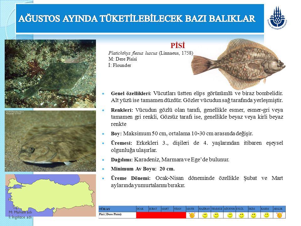 PİSİ Platichthys flesus luscus (Linnaeus, 1758) M: Dere Pisisi İ: Flounder Genel özellikleri: Vücutları üstten elips görünümlü ve biraz bombelidir. Al