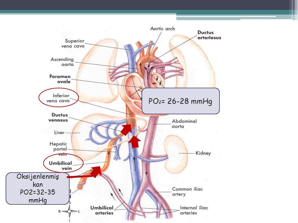 PO 2 = 26-28 mmHg Oksijenlenmiş kan PO2=32-35 mmHg
