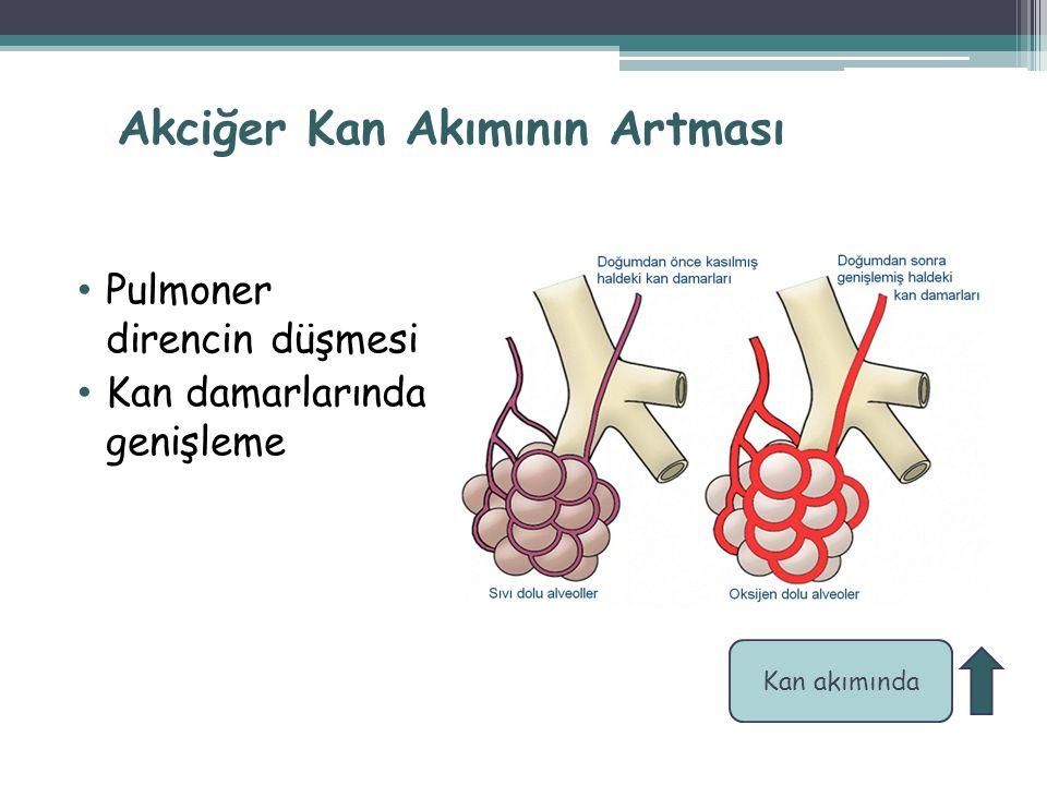 Akciğer Kan Akımının Artması Pulmoner direncin düşmesi Kan damarlarında genişleme 18 Kan akımında