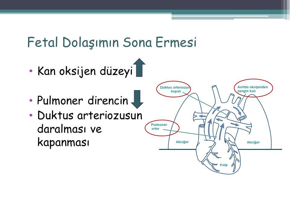 Fetal Dolaşımın Sona Ermesi Kan oksijen düzeyi Pulmoner direncin Duktus arteriozusun daralması ve kapanması 19