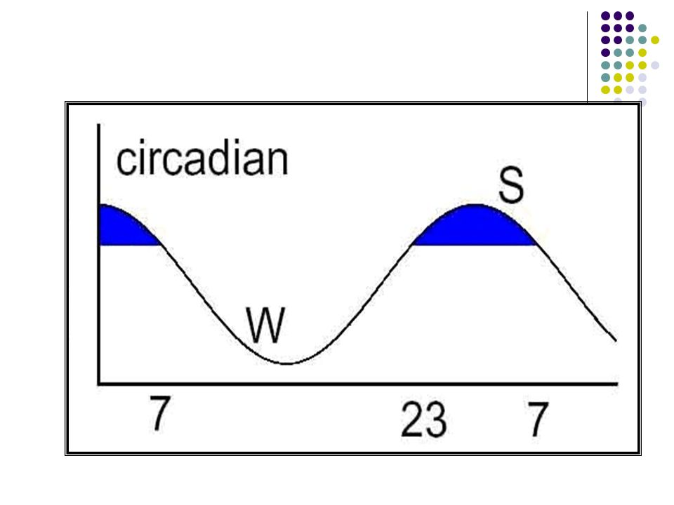 ECP ECP'nin intrensek ritmi 24 saatten uzun olup temel ritim 24 saatlik karanlık- aydınlık döngüsü ile oluşturulmaktadır.