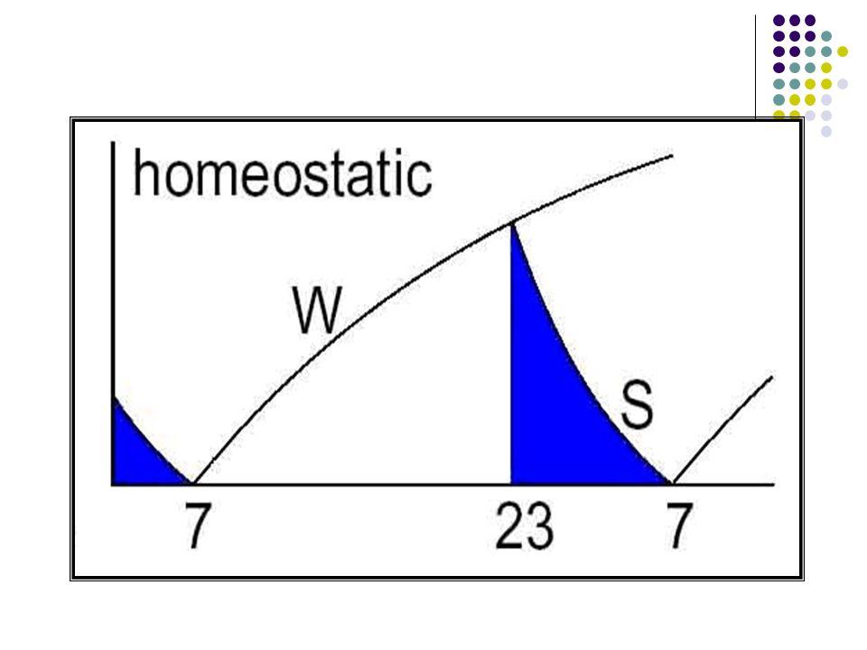 Uykululuğun iki süreç modeli