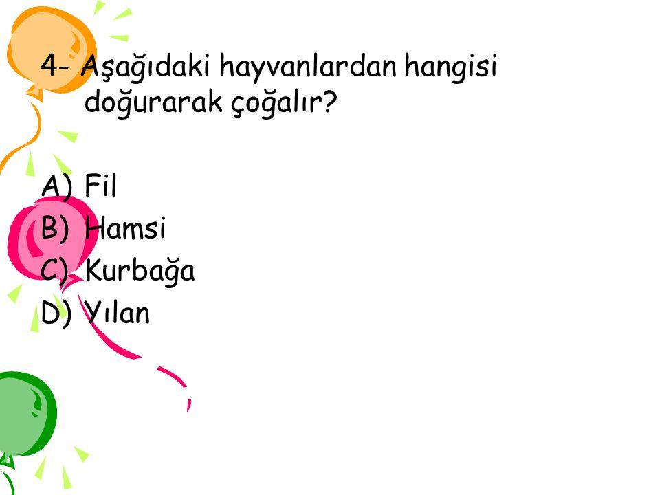 4- Aşağıdaki hayvanlardan hangisi doğurarak çoğalır? A)Fil B)Hamsi C)Kurbağa D)Yılan
