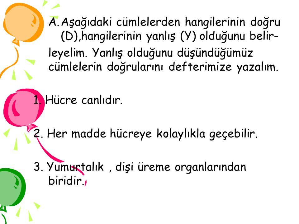 A.Aşağıdaki cümlelerden hangilerinin doğru (D),hangilerinin yanlış (Y) olduğunu belir- leyelim. Yanlış olduğunu düşündüğümüz cümlelerin doğrularını de