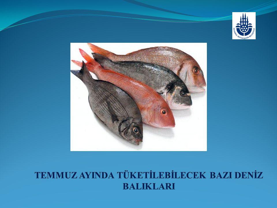 USKUMRU Scomber scombrus (Linnaeus, 1758) M: Çiroz, Kırma Çiroz İ: Atlantic mackerel A: Gemeine Makrele F: Maquereau commun  Genel özellikleri: Uzun yuvarlak vücutlu, iki sırt yüzgeçlidir.