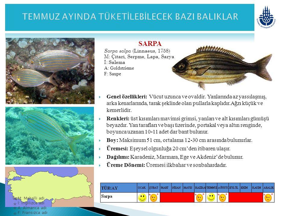 SARPA Sarpa salpa (Linnaeus, 1758) M: Çitari, Serpme, Lapa, Sarya İ: Salema A: Goldstrieme F: Saupe  Genel özellikleri: Vücut uzunca ve ovaldir. Yanl