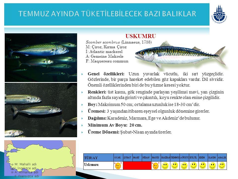 USKUMRU Scomber scombrus (Linnaeus, 1758) M: Çiroz, Kırma Çiroz İ: Atlantic mackerel A: Gemeine Makrele F: Maquereau commun  Genel özellikleri: Uzun