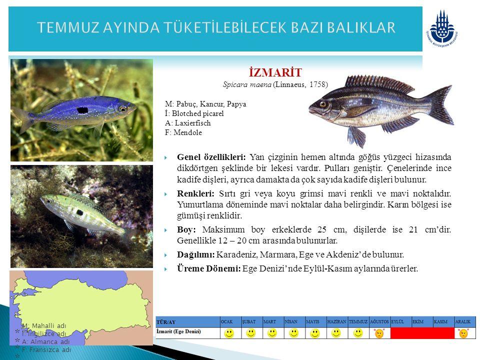 İZMARİT Spicara maena (Linnaeus, 1758) M: Pabuç, Kancur, Papya İ: Blotched picarel A: Laxierfisch F: Mendole  Genel özellikleri: Yan çizginin hemen a