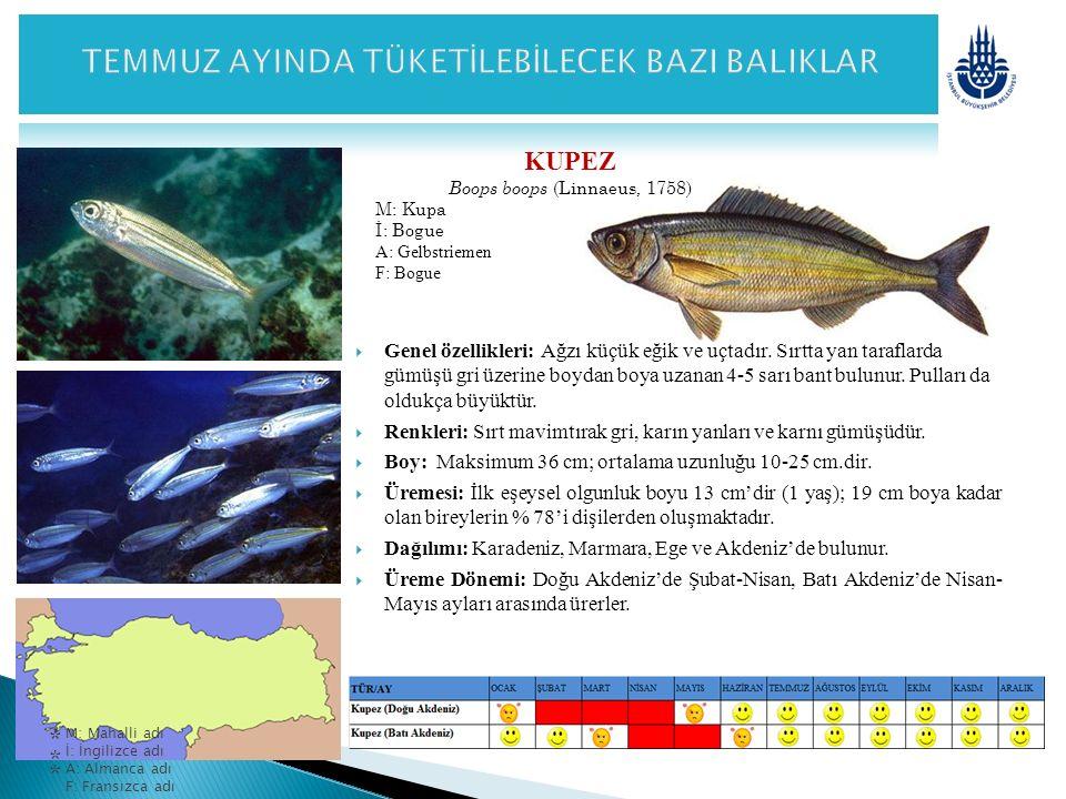 KUPEZ Boops boops (Linnaeus, 1758) M: Kupa İ: Bogue A: Gelbstriemen F: Bogue  Genel özellikleri: Ağzı küçük eğik ve uçtadır. Sırtta yan taraflarda gü
