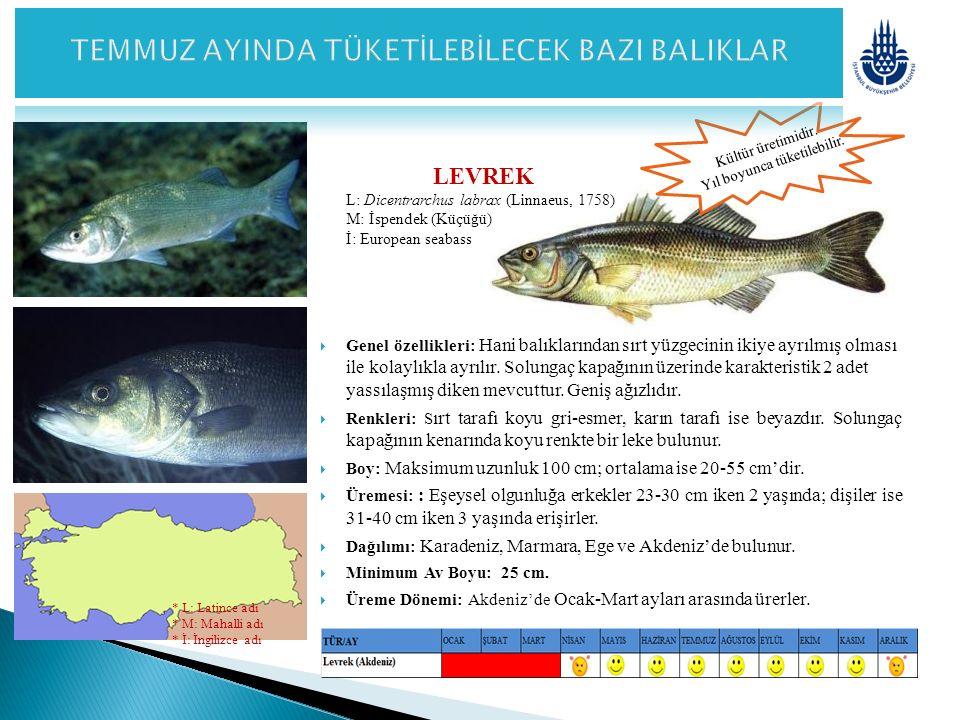 PİSİ Platichthys flesus luscus (Linnaeus, 1758) M: Dere Pisisi İ: Flounder  Genel özellikleri: Vücutları üstten elips görünümlü ve biraz bombelidir.