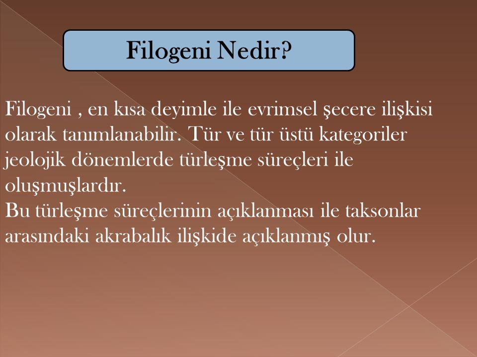 Filogeni, en kısa deyimle ile evrimsel ş ecere ili ş kisi olarak tanımlanabilir. Tür ve tür üstü kategoriler jeolojik dönemlerde türle ş me süreçleri