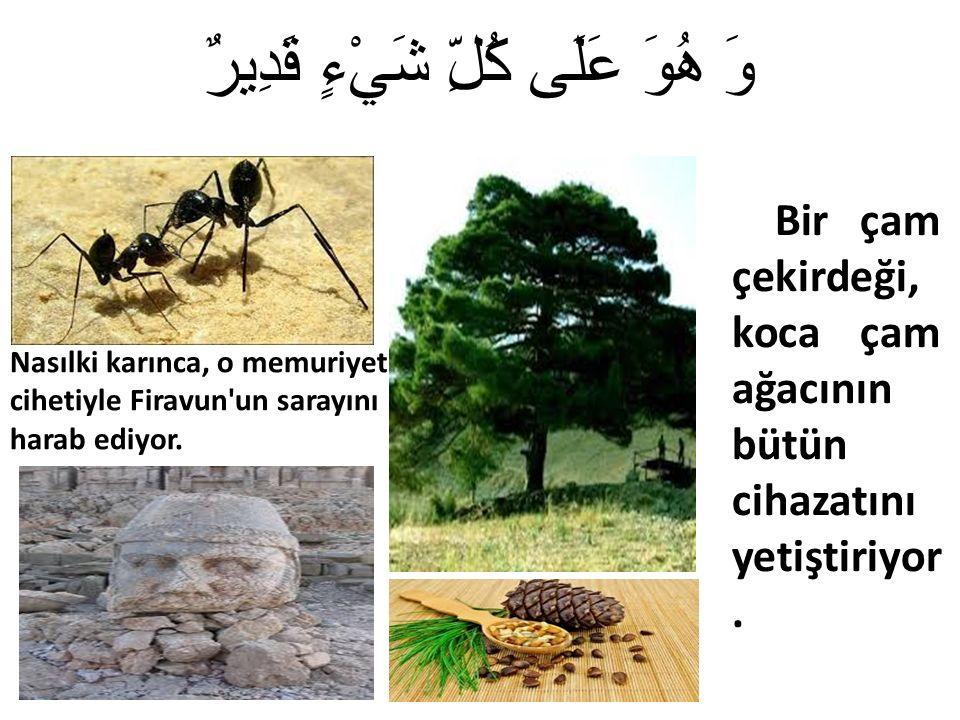 وَ هُوَ عَلَى كُلِّ شَيْءٍ قَدِيرٌ Nasılki karınca, o memuriyet cihetiyle Firavun un sarayını harab ediyor.