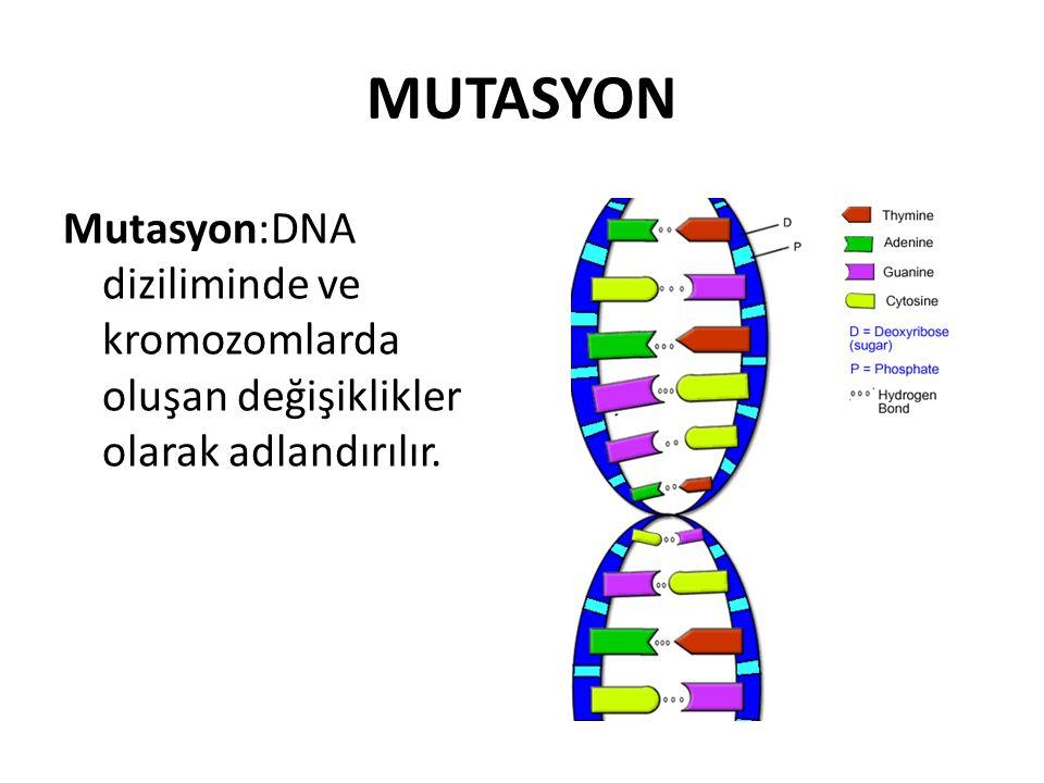 MUTASYON Mutasyon:DNA diziliminde ve kromozomlarda oluşan değişiklikler olarak adlandırılır.