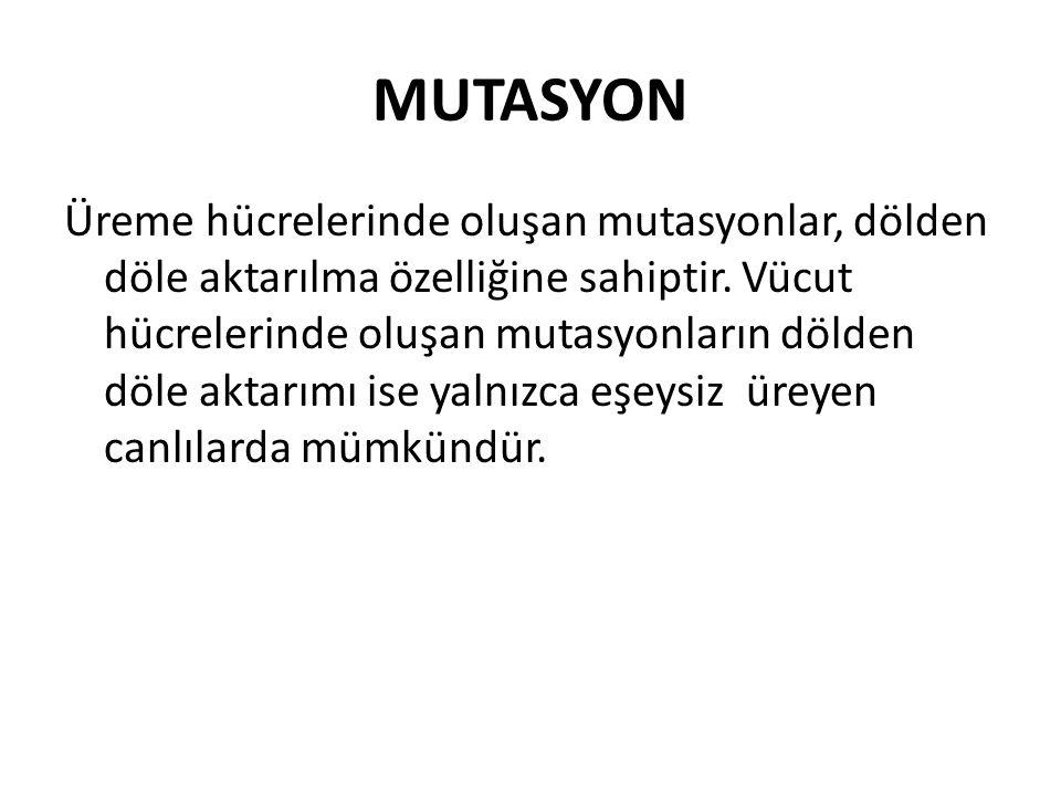 MUTASYON Üreme hücrelerinde oluşan mutasyonlar, dölden döle aktarılma özelliğine sahiptir. Vücut hücrelerinde oluşan mutasyonların dölden döle aktarım