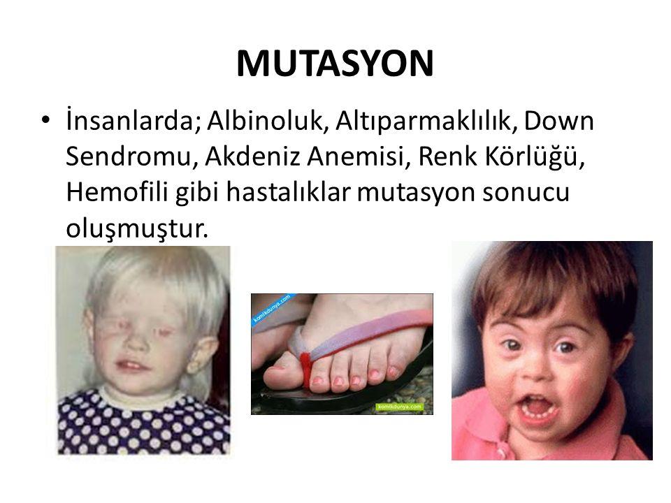 MUTASYON İnsanlarda; Albinoluk, Altıparmaklılık, Down Sendromu, Akdeniz Anemisi, Renk Körlüğü, Hemofili gibi hastalıklar mutasyon sonucu oluşmuştur.