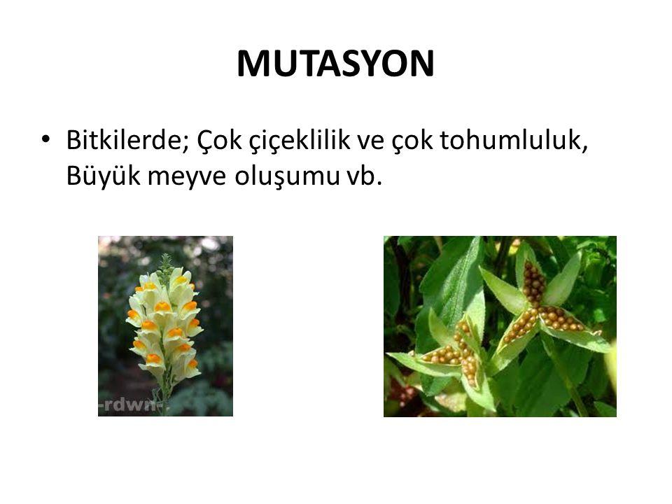 MUTASYON Bitkilerde; Çok çiçeklilik ve çok tohumluluk, Büyük meyve oluşumu vb.