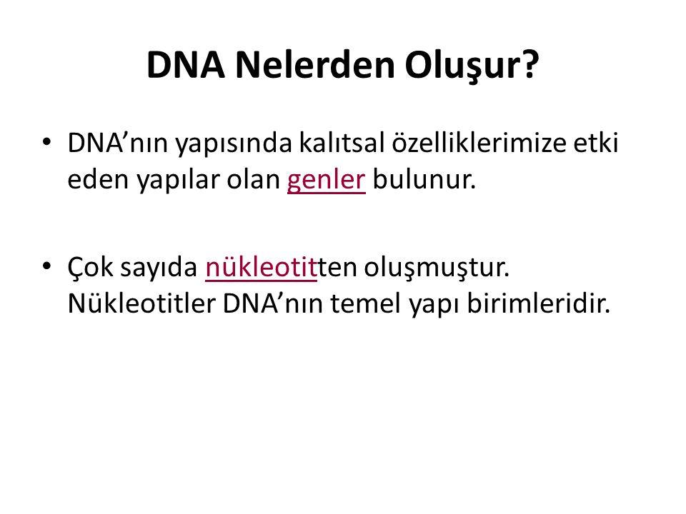 DNA Nelerden Oluşur? DNA'nın yapısında kalıtsal özelliklerimize etki eden yapılar olan genler bulunur. Çok sayıda nükleotitten oluşmuştur. Nükleotitle