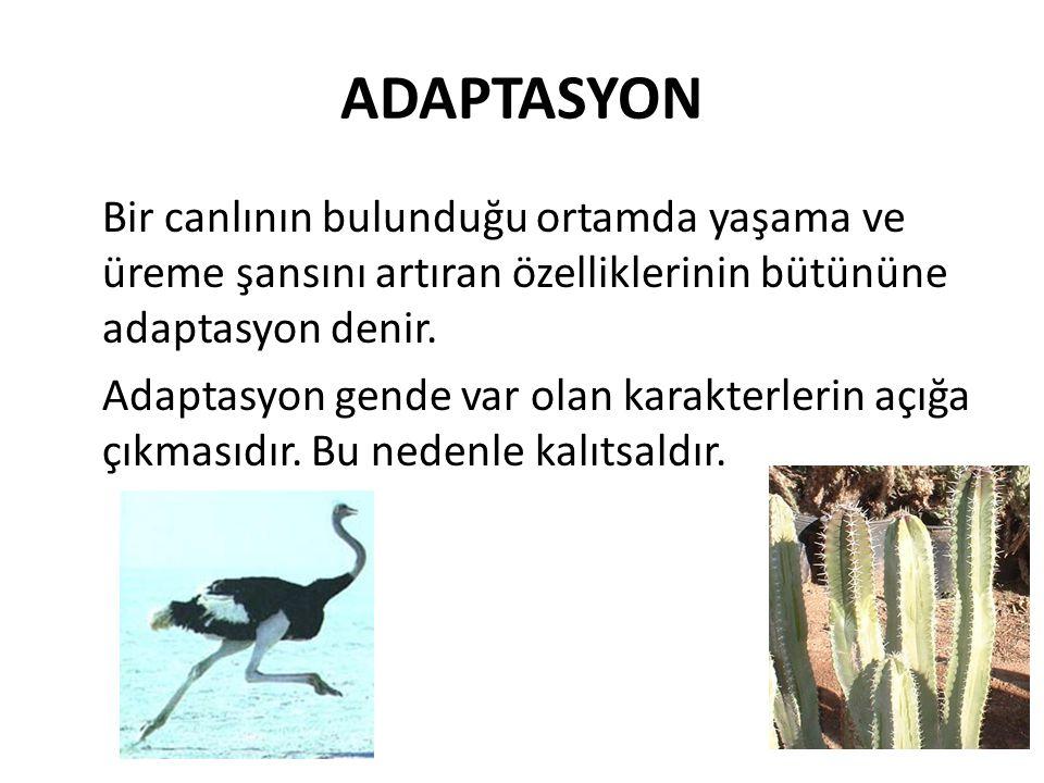 ADAPTASYON Bir canlının bulunduğu ortamda yaşama ve üreme şansını artıran özelliklerinin bütününe adaptasyon denir. Adaptasyon gende var olan karakter