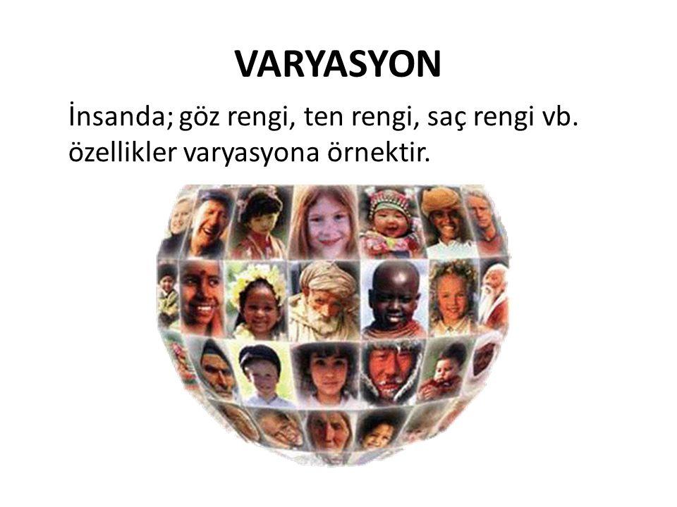 VARYASYON İnsanda; göz rengi, ten rengi, saç rengi vb. özellikler varyasyona örnektir.