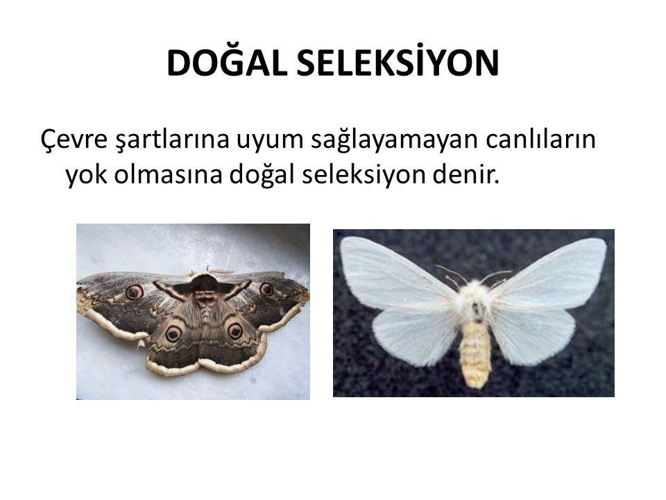 DOĞAL SELEKSİYON Çevre şartlarına uyum sağlayamayan canlıların yok olmasına doğal seleksiyon denir.