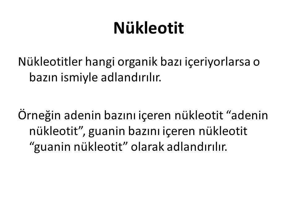 """Nükleotit Nükleotitler hangi organik bazı içeriyorlarsa o bazın ismiyle adlandırılır. Örneğin adenin bazını içeren nükleotit """"adenin nükleotit"""", guani"""