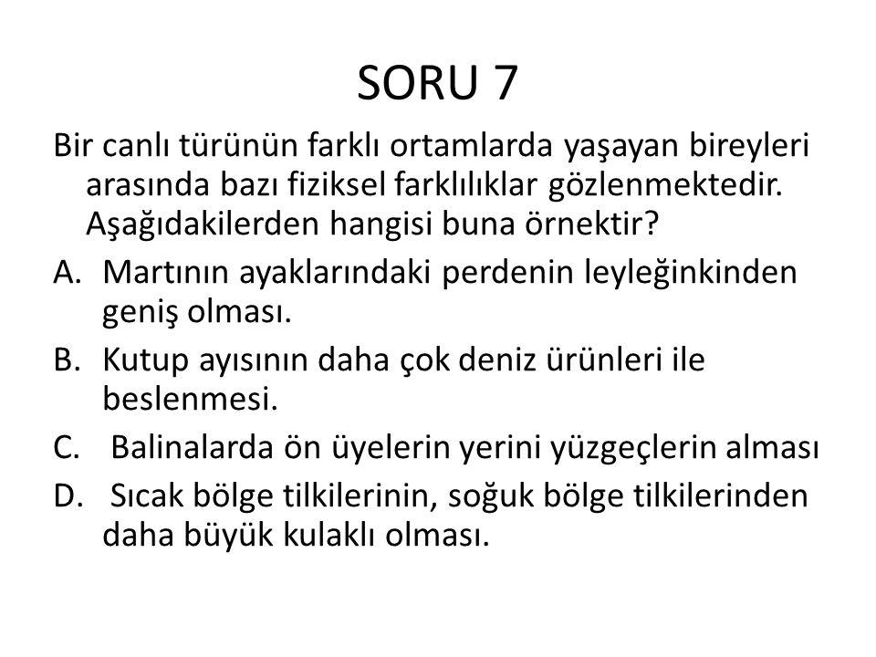 SORU 7 Bir canlı türünün farklı ortamlarda yaşayan bireyleri arasında bazı fiziksel farklılıklar gözlenmektedir. Aşağıdakilerden hangisi buna örnektir
