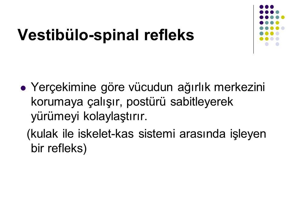 Denge ile ilgili refleksler: Vestibulospinal refleks Vestibulooküler refleks Vestibuloservikal refleks