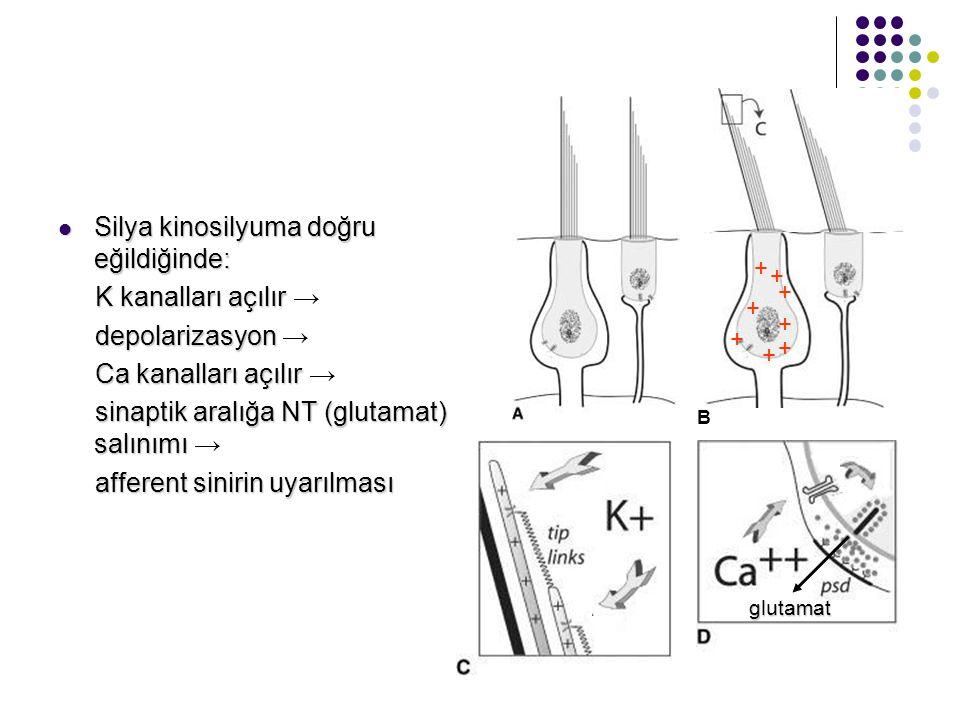 SSK'ın sensasyonu Baş, SSK'ın düzleminde hareket ettiğinde, endolenfin eylemsizliği sonucu, endolenf göreceli olarak zıt yönde hareket eder Baş, SSK'ı