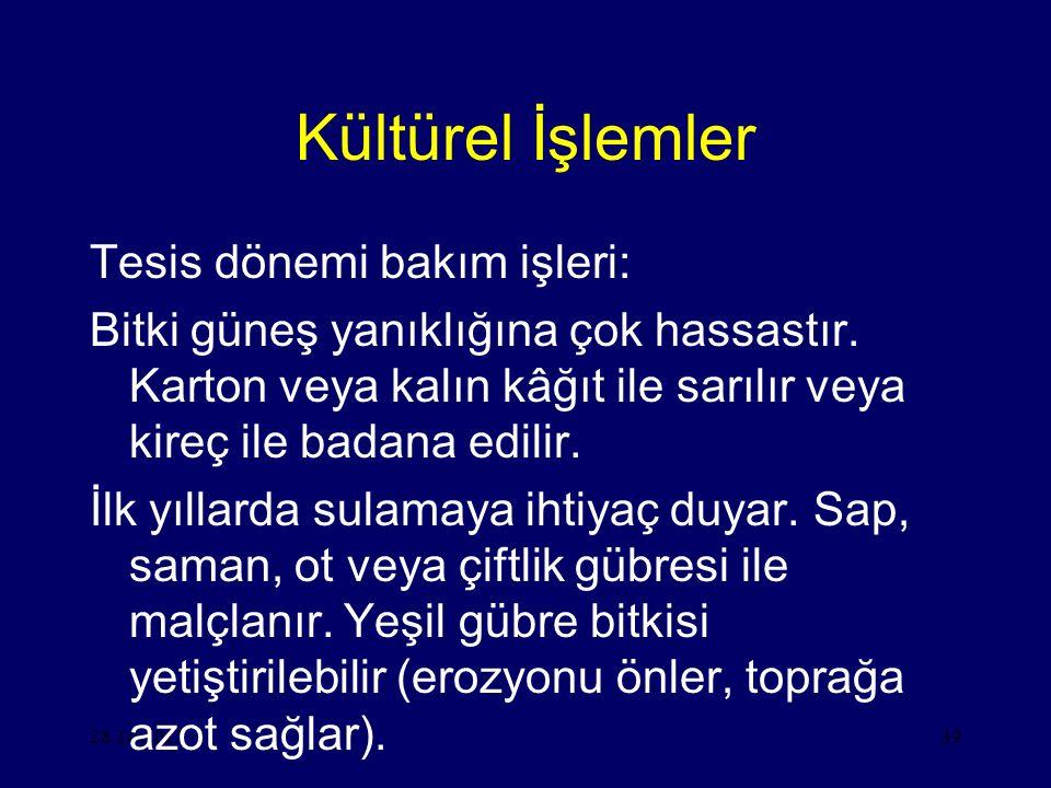 28.10.201539 Kültürel İşlemler Tesis dönemi bakım işleri: Bitki güneş yanıklığına çok hassastır.