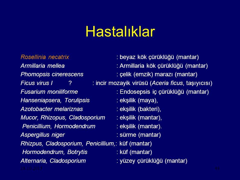 28.10.201549 Hastalıklar Rosellinia necatrix: beyaz kök çürüklüğü (mantar) Armillaria mellea: Armillaria kök çürüklüğü (mantar) Phomopsis cinerescens: çelik (emzik) marazı (mantar) Ficus virus I?: incir mozayik virüsü (Aceria ficus, taşıyıcısı) Fusarium moniliforme: Endosepsis iç çürüklüğü (mantar) Hanseniapsera, Torulipsis: ekşilik (maya), Azotobacter melariznas: ekşilik (bakteri), Mucor, Rhizopus, Cladosporium: ekşilik (mantar), Penicillium, Hormodendrum: ekşilik (mantar).