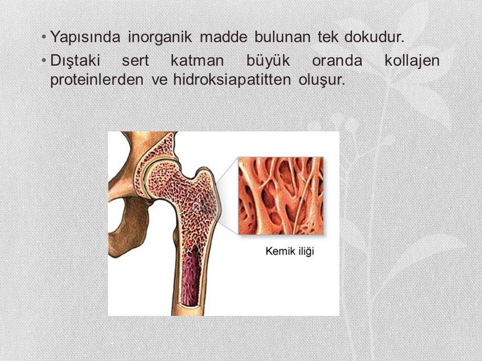 Yapısında inorganik madde bulunan tek dokudur. Dıştaki sert katman büyük oranda kollajen proteinlerden ve hidroksiapatitten oluşur.