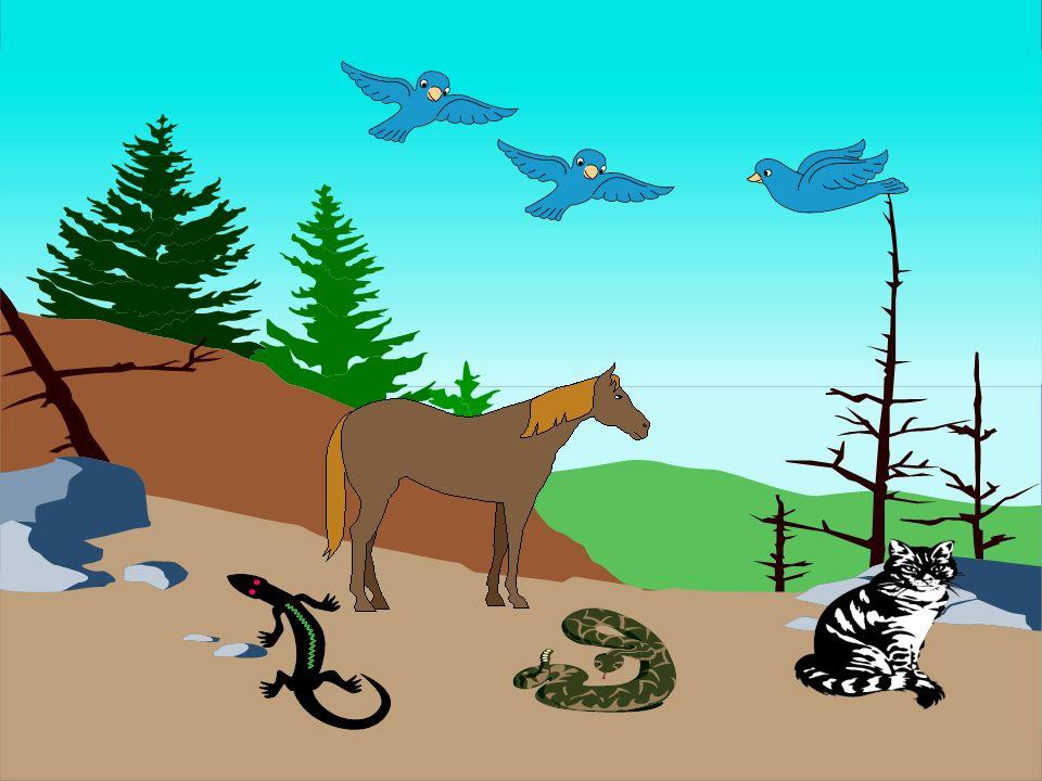 Bilgiyi ve Sevgiyi Paylaşmak İçin... www.ramazansakin.com CANLILARIN ÖZELLİKLERİ 1) HAYVANLARIN ÖZELLİKLERİ A-Hayvanlar da hareket eder.