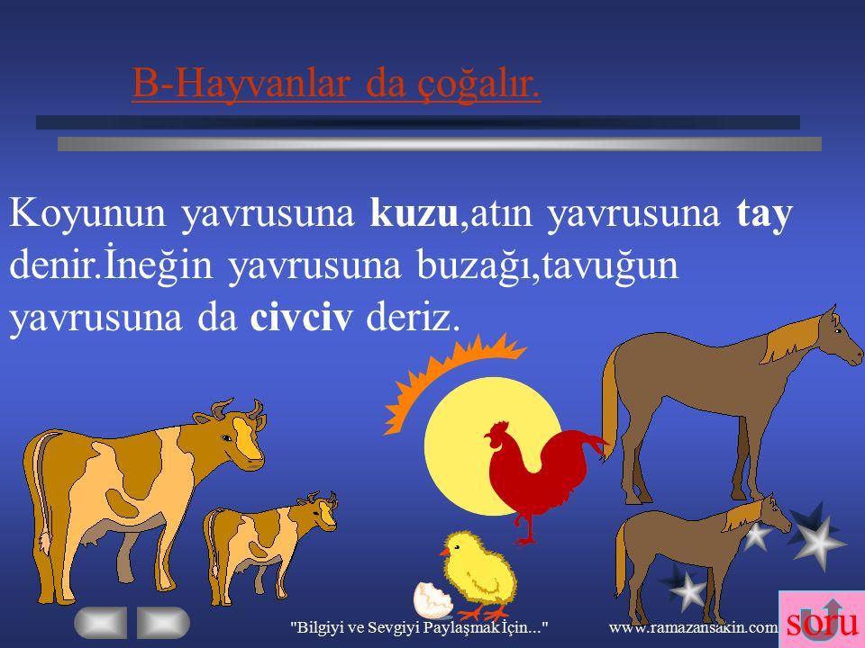 Bilgiyi ve Sevgiyi Paylaşmak İçin... www.ramazansakin.com