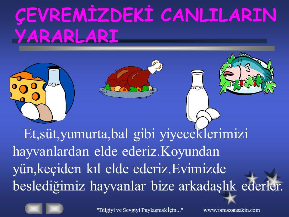 Bilgiyi ve Sevgiyi Paylaşmak İçin... www.ramazansakin.com ÇEVREMİZDEKİ CANLILARIN YARARLARI Et,süt,yumurta,bal gibi yiyeceklerimizi hayvanlardan elde ederiz.Koyundan yün,keçiden kıl elde ederiz.Evimizde beslediğimiz hayvanlar bize arkadaşlık ederler.