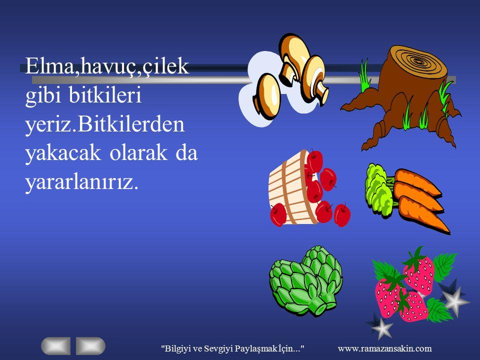 Bilgiyi ve Sevgiyi Paylaşmak İçin... www.ramazansakin.com Elma,havuç,çilek gibi bitkileri yeriz.Bitkilerden yakacak olarak da yararlanırız.