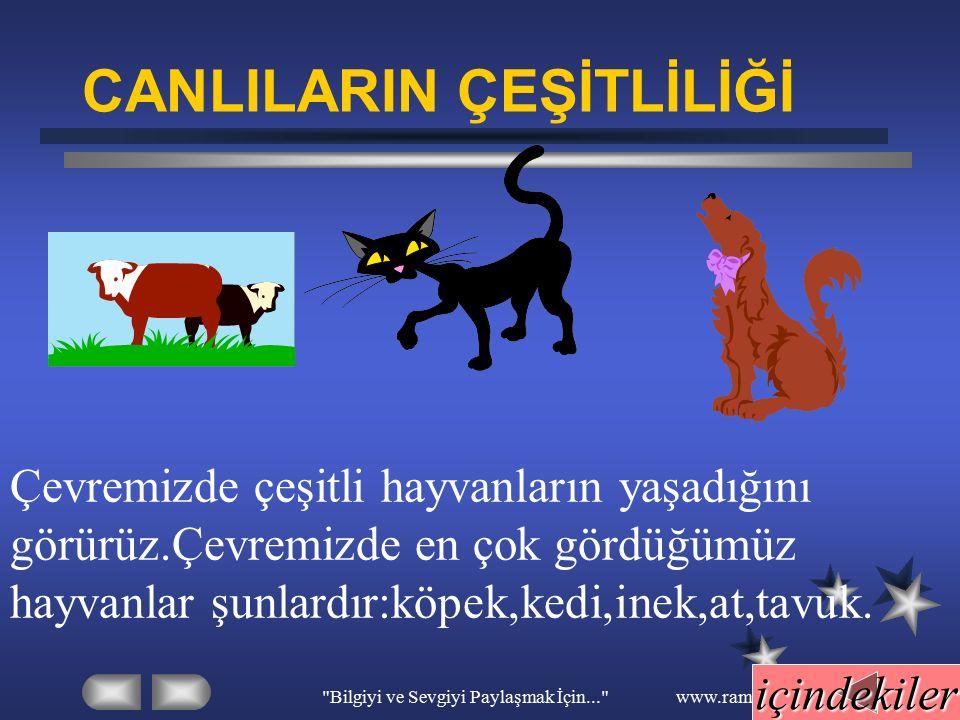 Bilgiyi ve Sevgiyi Paylaşmak İçin... www.ramazansakin.com yapraklar gövde kök