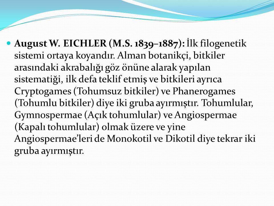 August W. EICHLER (M.S. 1839–1887): İlk filogenetik sistemi ortaya koyandır. Alman botanikçi, bitkiler arasındaki akrabalığı göz önüne alarak yapılan