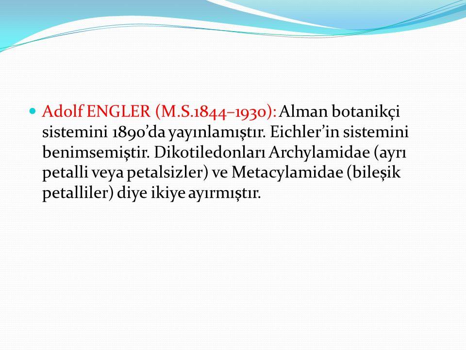 Adolf ENGLER (M.S.1844–1930): Alman botanikçi sistemini 1890'da yayınlamıştır. Eichler'in sistemini benimsemiştir. Dikotiledonları Archylamidae (ayrı