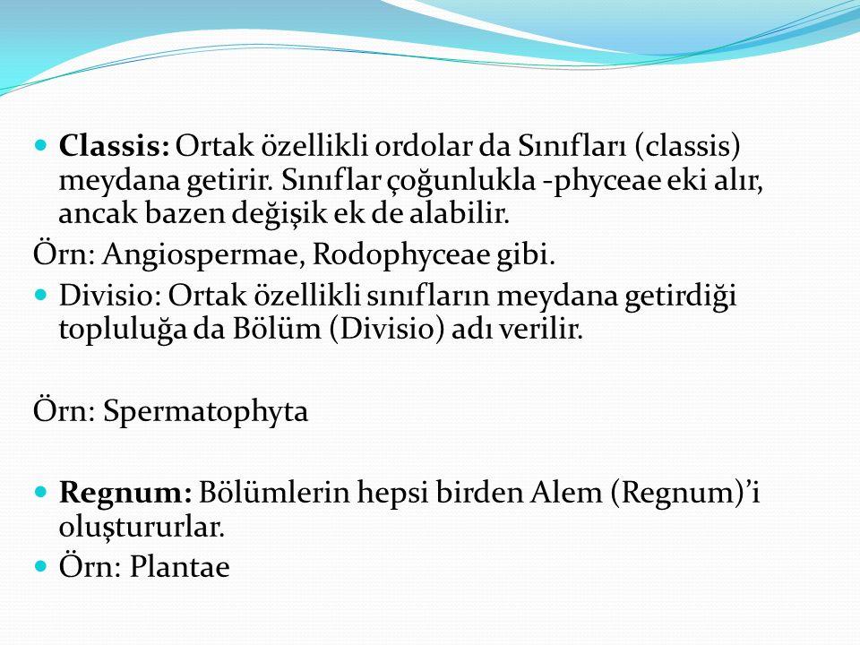 Classis: Ortak özellikli ordolar da Sınıfları (classis) meydana getirir. Sınıflar çoğunlukla -phyceae eki alır, ancak bazen değişik ek de alabilir. Ör