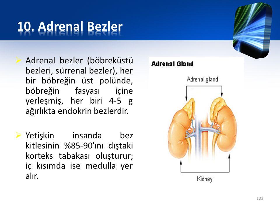  Adrenal bezler (böbreküstü bezleri, sürrenal bezler), her bir böbreğin üst polünde, böbreğin fasyası içine yerleşmiş, her biri 4-5 g ağırlıkta endok