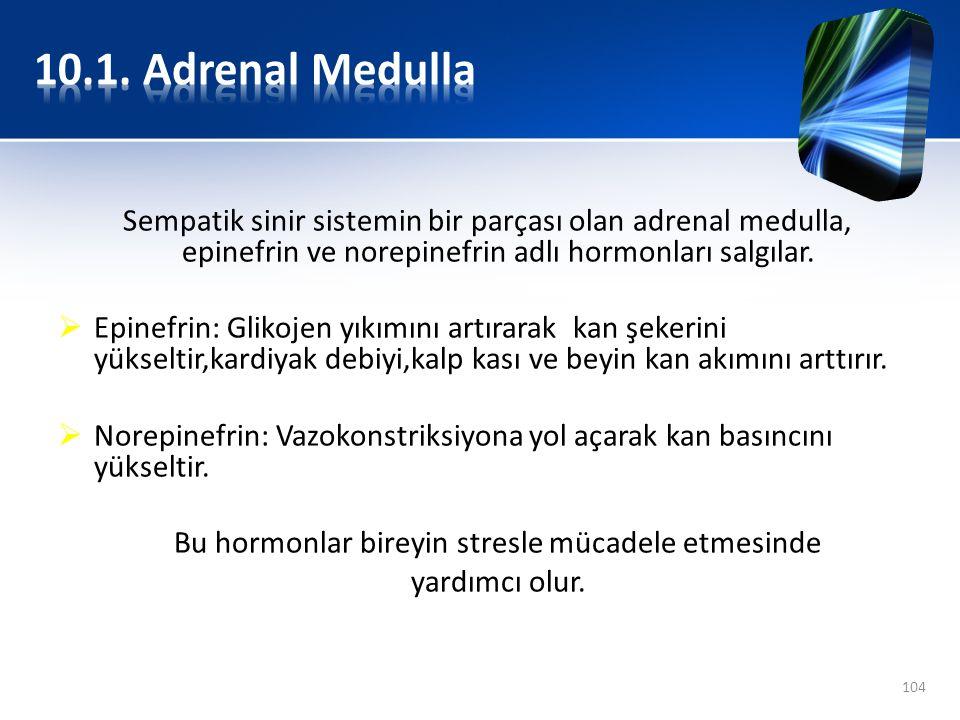 Sempatik sinir sistemin bir parçası olan adrenal medulla, epinefrin ve norepinefrin adlı hormonları salgılar.  Epinefrin: Glikojen yıkımını artırarak