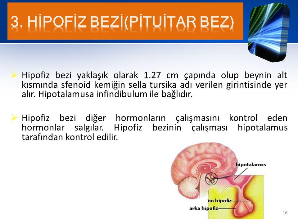  Hipofiz bezi yaklaşık olarak 1.27 cm çapında olup beynin alt kısmında sfenoid kemiğin sella tursika adı verilen girintisinde yer alır. Hipotalamusa