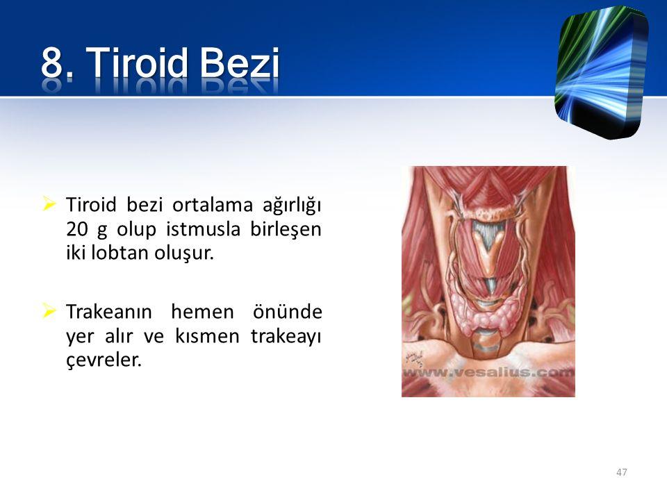 Tiroid bezi ortalama ağırlığı 20 g olup istmusla birleşen iki lobtan oluşur.  Trakeanın hemen önünde yer alır ve kısmen trakeayı çevreler. 47