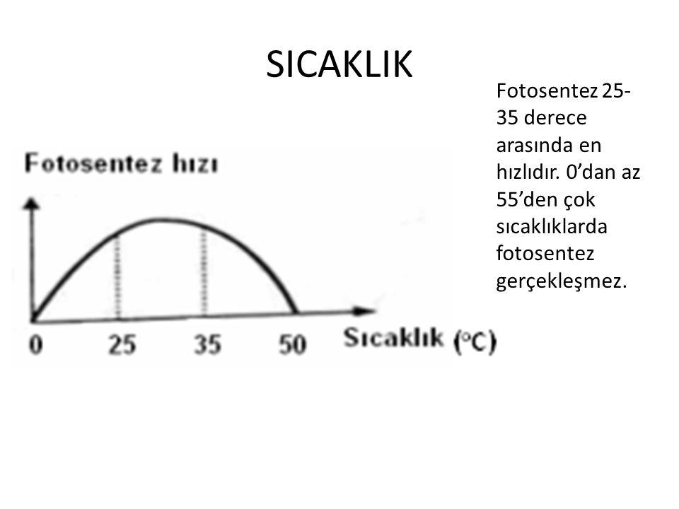 SICAKLIK Fotosentez 25- 35 derece arasında en hızlıdır. 0'dan az 55'den çok sıcaklıklarda fotosentez gerçekleşmez.