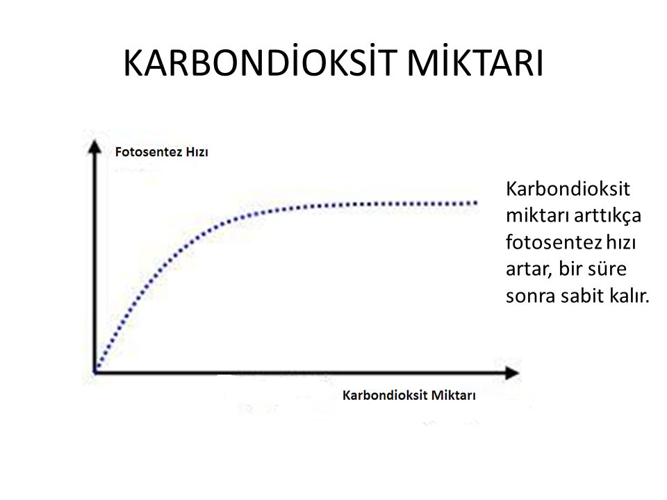 KARBONDİOKSİT MİKTARI Karbondioksit miktarı arttıkça fotosentez hızı artar, bir süre sonra sabit kalır.