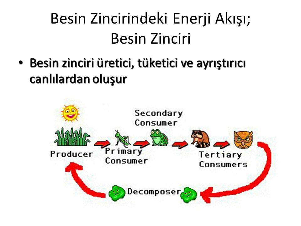 Besin Zincirindeki Enerji Akışı; Besin Zinciri Besin zinciri üretici, tüketici ve ayrıştırıcı canlılardan oluşur Besin zinciri üretici, tüketici ve ay